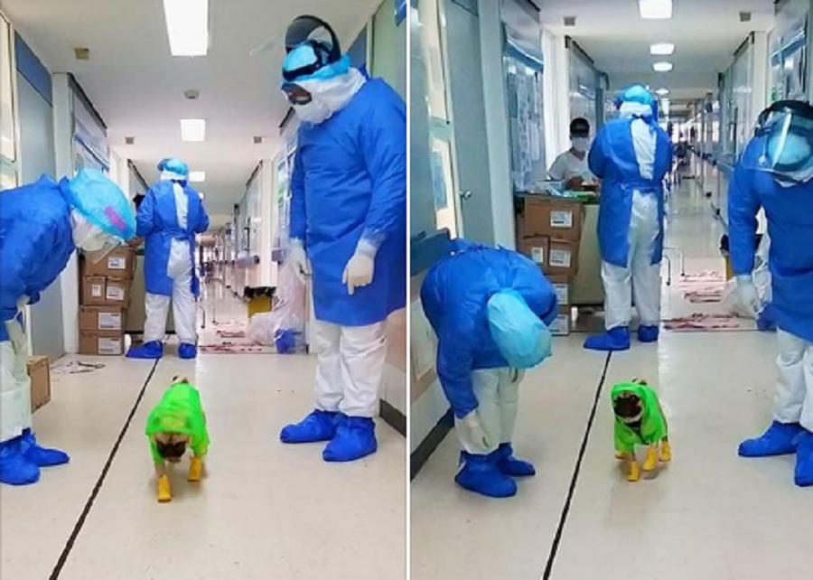 cachorro com médicos