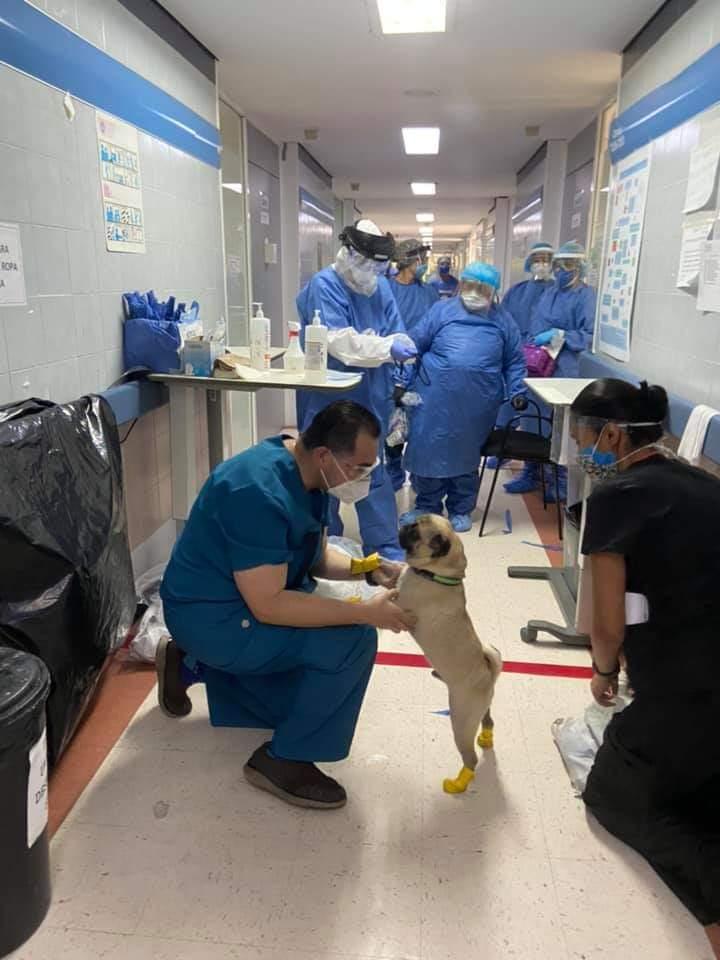 cachorro terapeuta com os médicos