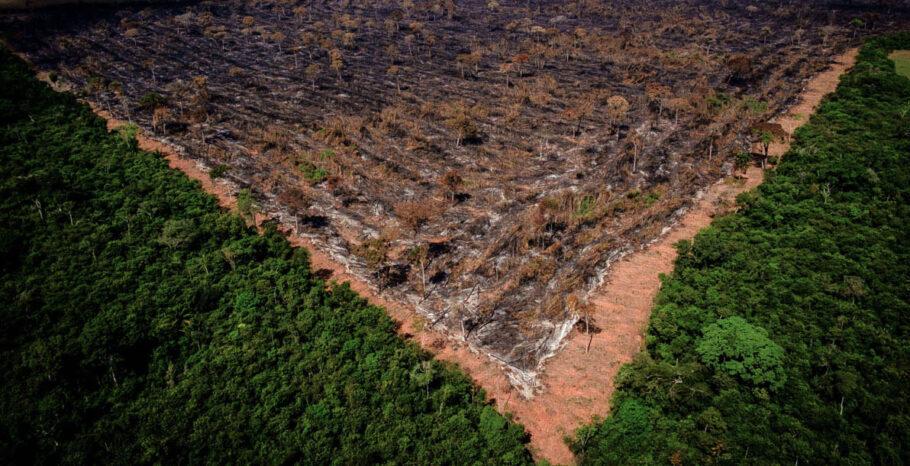 Sob Bolsonaro, desmatamento da Amazônia foi o maior em 10 anos