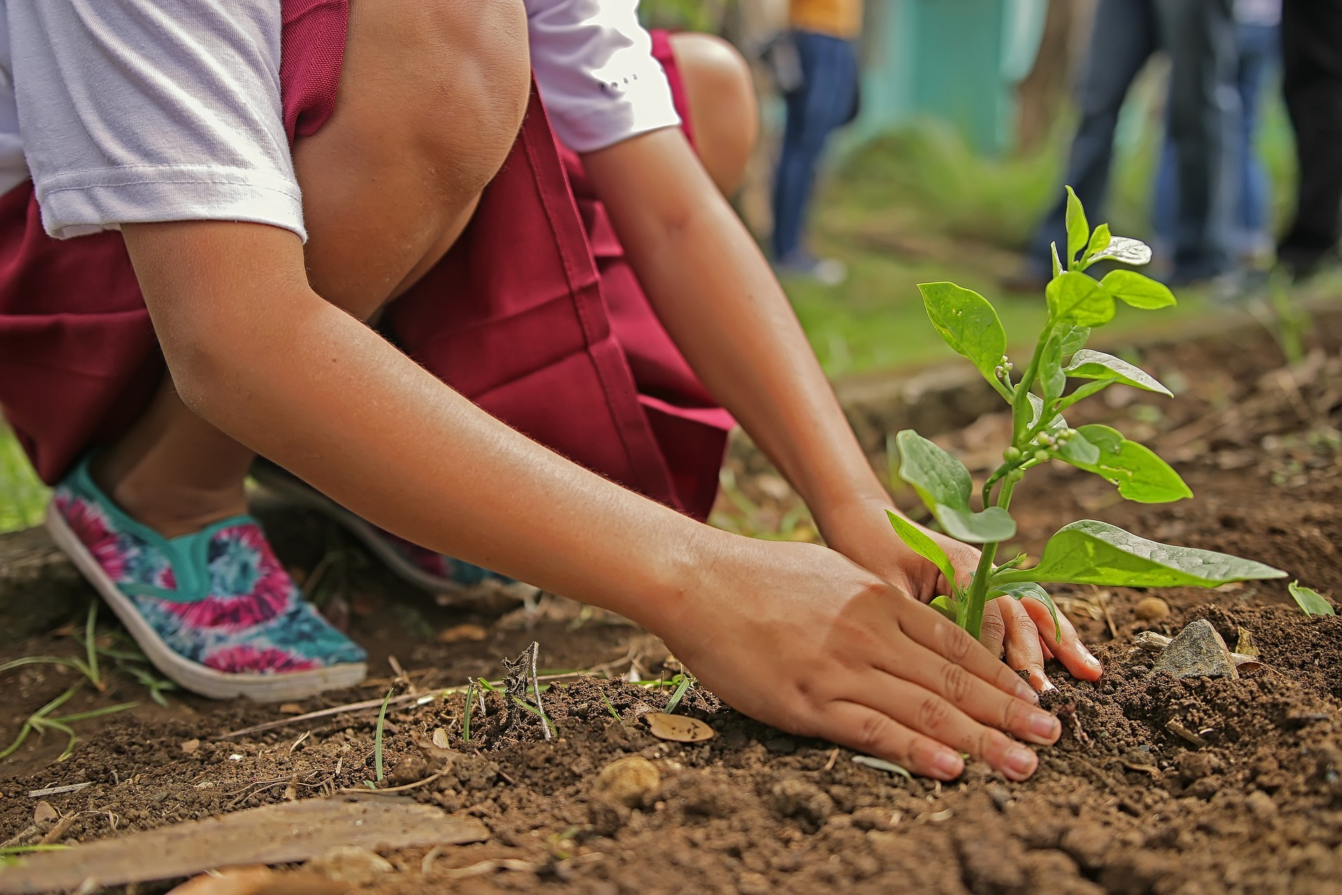 criança planta árvore