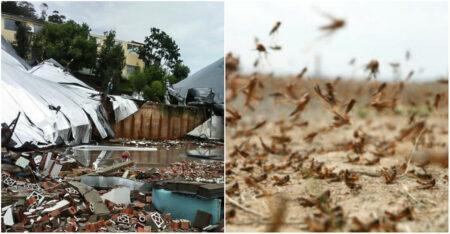 Ciclone bomba pode impedir nuvem de gafanhotos de atingir o Brasil