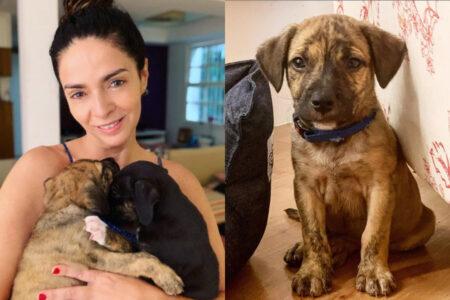 Claudia Ohana com os cães adotados