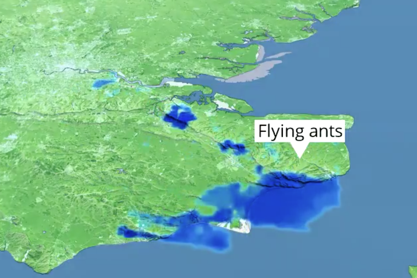formigas voadoras
