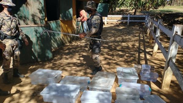 Policiais encontraram 16 serpentes escondidas, em caixas individuais, em uma baia de cavalo em Planaltina