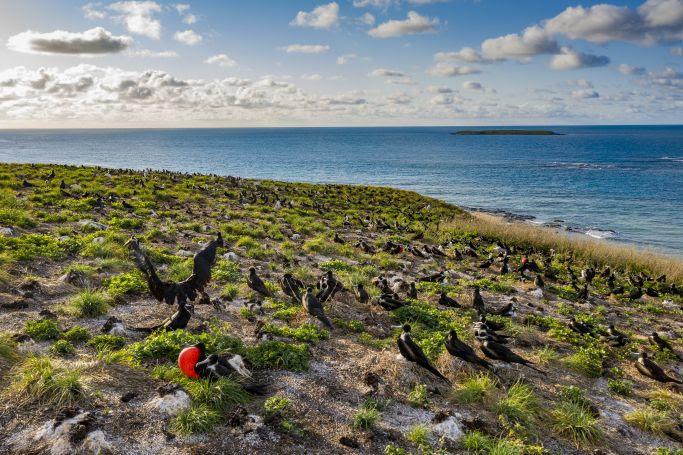 Nova temporada de 'Brasil Selvagem', do NetGeo, mostra a biodiversidade do litoral brasileiro através de imagens incríveis