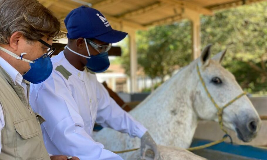 soro criado com plasma de cavalos protege contra coronavírus