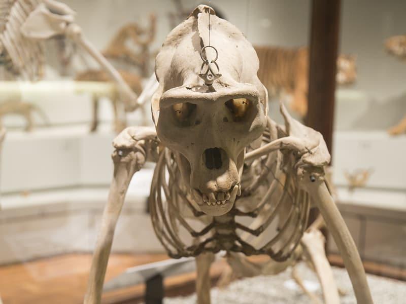 Museu de Zoologia da USP