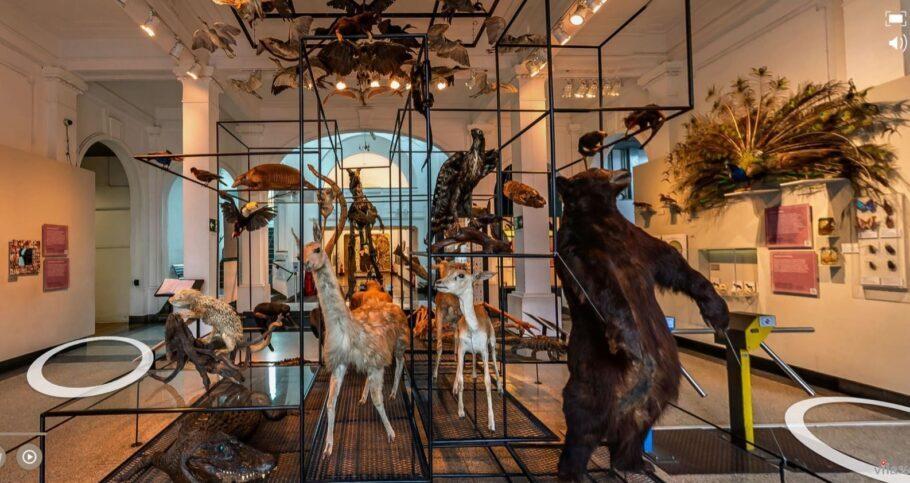 tour virtual Museu de Zoologia da USP