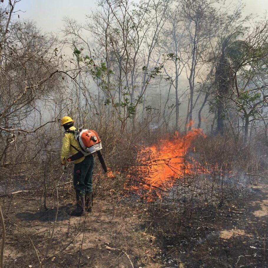 bombeiro tenta apagar foco de incêndio no pantanal