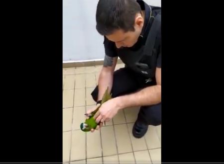segurança metrô papagaio