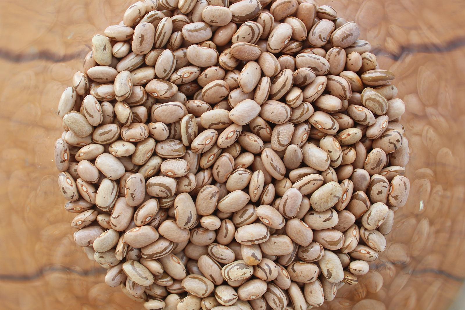 Fontes de proteína vegetal, as leguminosas são fundamentais para a composição dos músculos e diversas outras funções