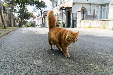 gato coronavírus