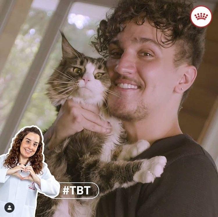 Campanha destaca a importância da saúde preventiva dos gatíneos