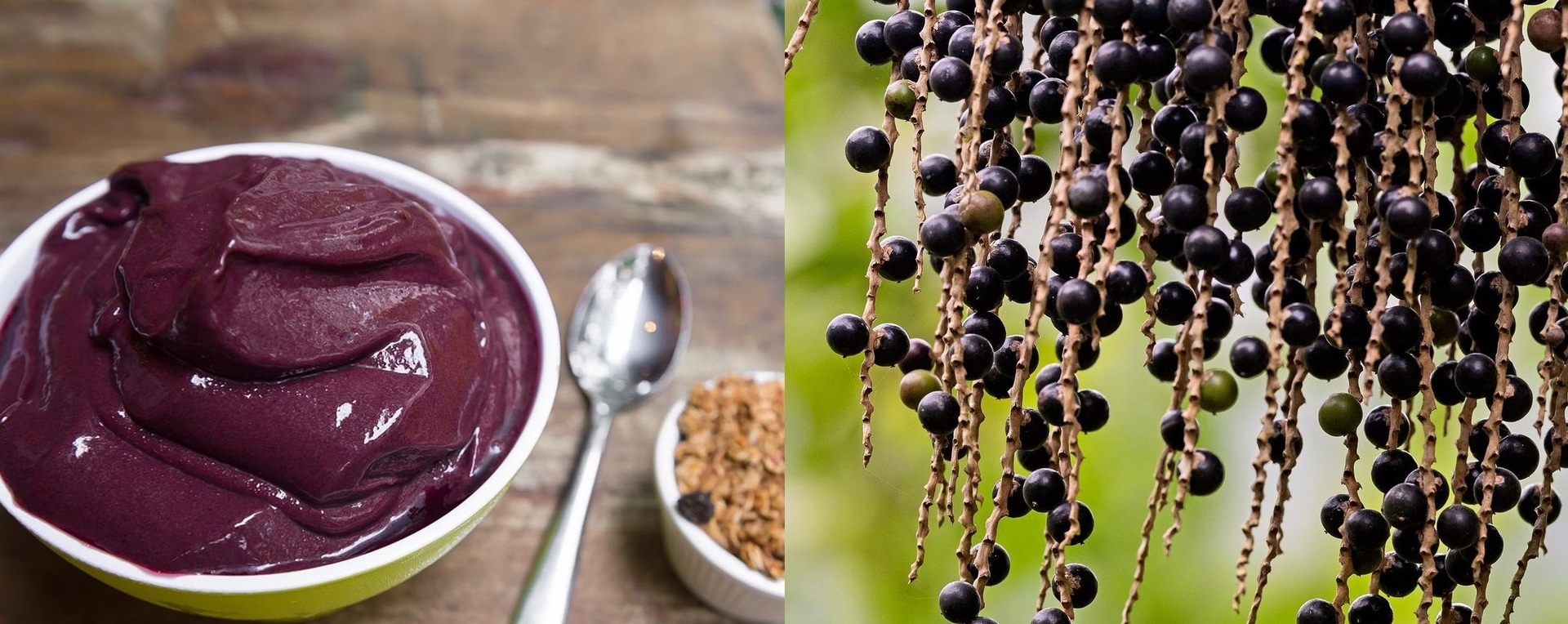 Juçaí tem 50% a mais de ferro e quatro vezes mais propriedades antioxidantes do que o açaí tradicional