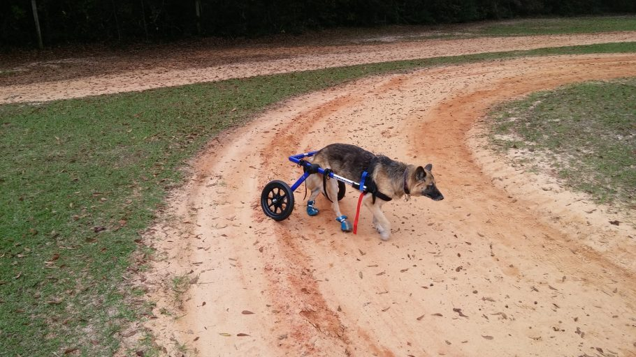 Cão deficiente - Lado B Viagem e Patas ao Alto