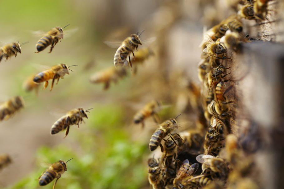 ataque de abelhas