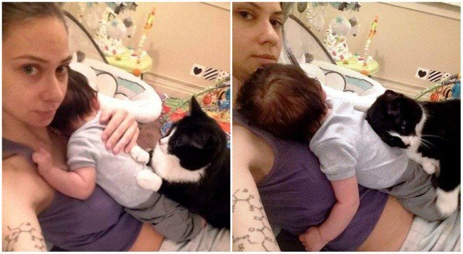 gata-que-protege-o-bebe-4