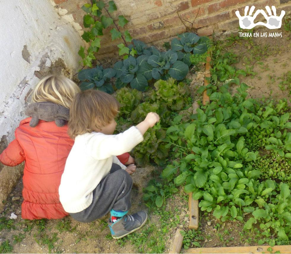 Por meio das hortas as crianças aprendem sobre os ciclos naturais da vida e aproximam sua relação com o meio ambiente.