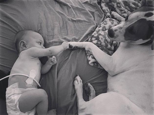 cao-bebe-prematura-cuida_5