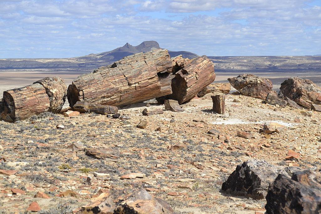 As árvores petrificadas têm até 35m de altura