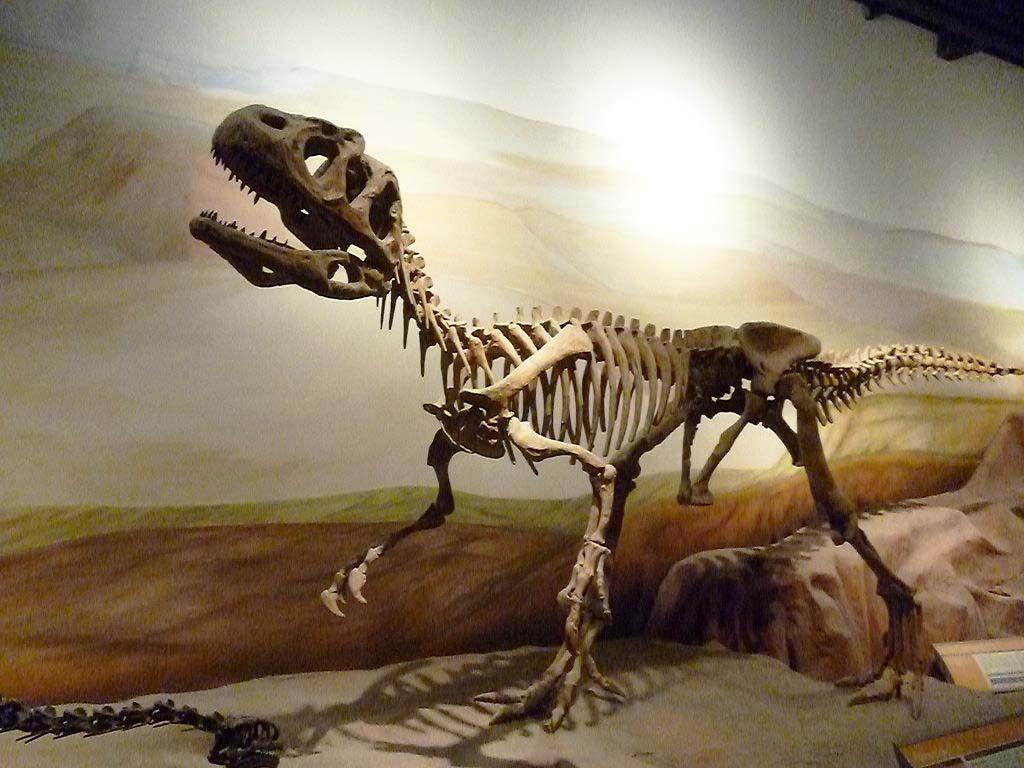 O museu reúne 5 mil peças que simulam a fauna e a flora da região