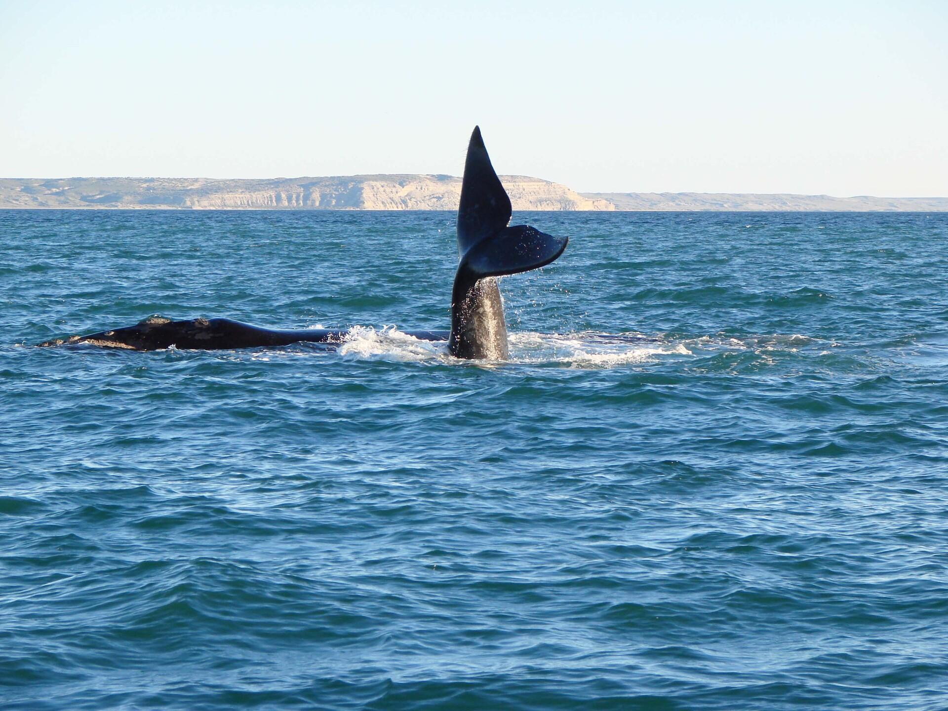 Baleias podem ser avistadas entre junho e dezembro, quando se aproximam da costa