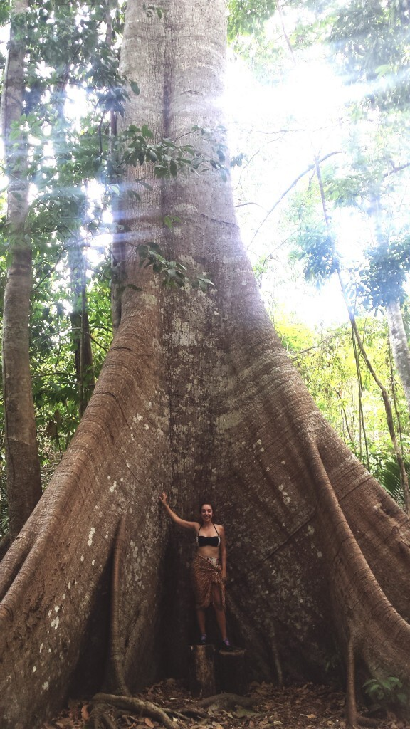 Samauma, árvore gigante que dizem ter mais de mil anos