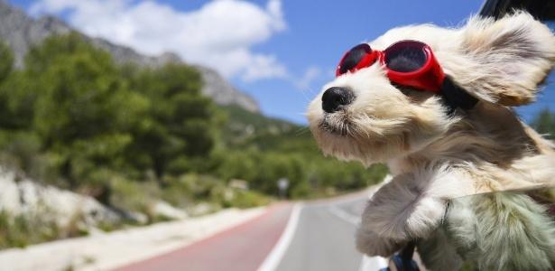 cao-viajando-viagem-de-carro-com-cao-cachorro