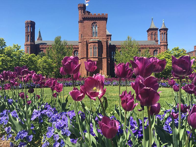 """Tulupas enfeitam o """"The Castle"""", prédio que abriga o Centro de Informações do Smithsonian"""