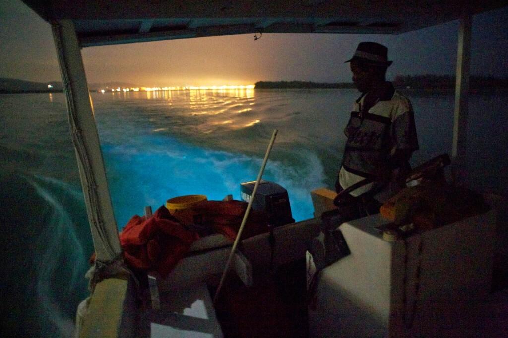 Bioluminescent Bay, Jamaica