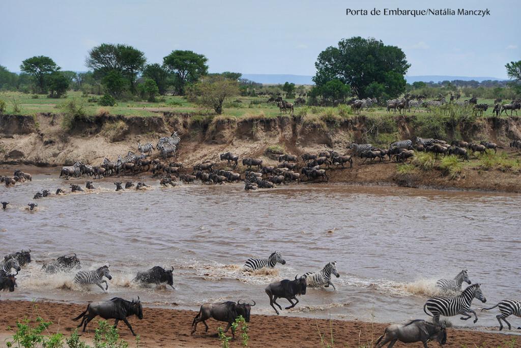 Zebras e gnus na migração no Serengueti