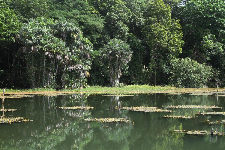 Açude Água Preta, no Parque Estadual do Utinga