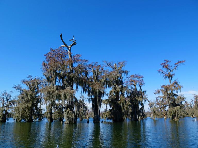 A beleza dos misteriosos pântanos - foto Ana Paula Garrido/ O melhor da viagem