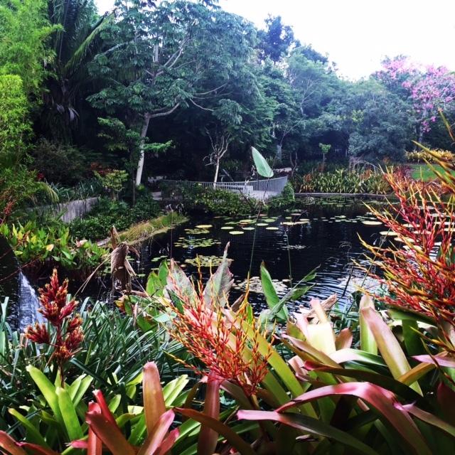 Passeio relaxante no Jardim Botânico