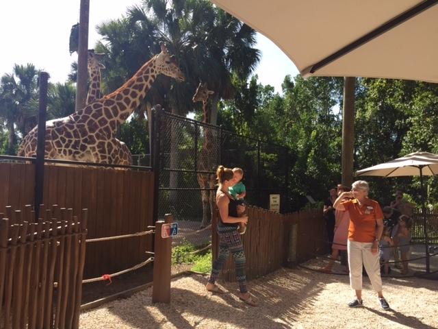 As crianças se divertem alimentando as girafas