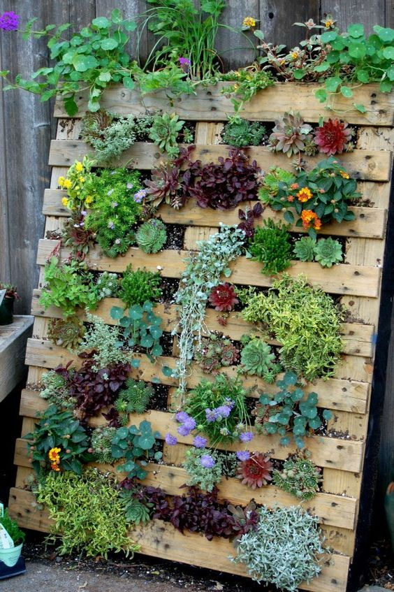 ideias para um jardim bonito:ideias para montar um jardim vertical com pouco dinheiro