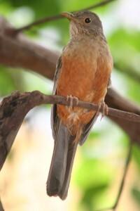 plantador pássaro