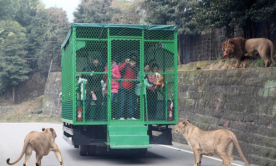 quem-inova-zoológico-china (6)
