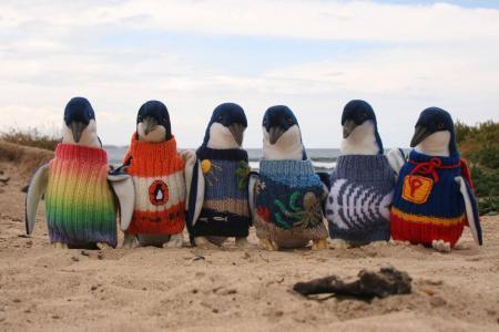 Penguins Foundation - foto divulgação