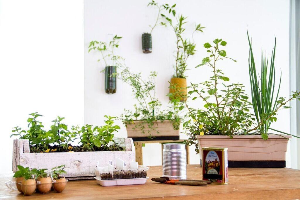 Você se sente bem só de olhar para essas plantas, não é?