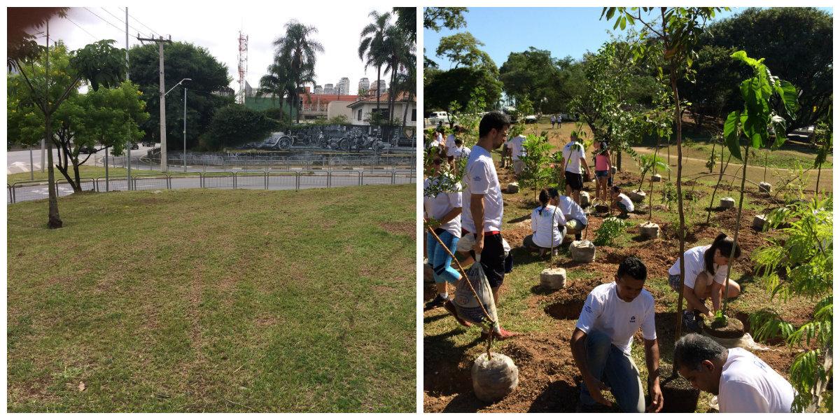 flores cidade jardim: Pinheiros terá a maior 'floresta de bolso' da cidade