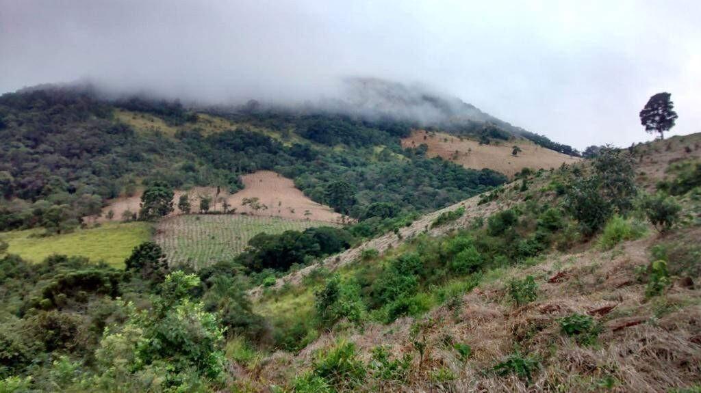 Vista da área em Extrema (MG) que recebeu as 87 mudas de árvores nativas da mata Atlântica plantadas após o casamento de Mariana e Roberto