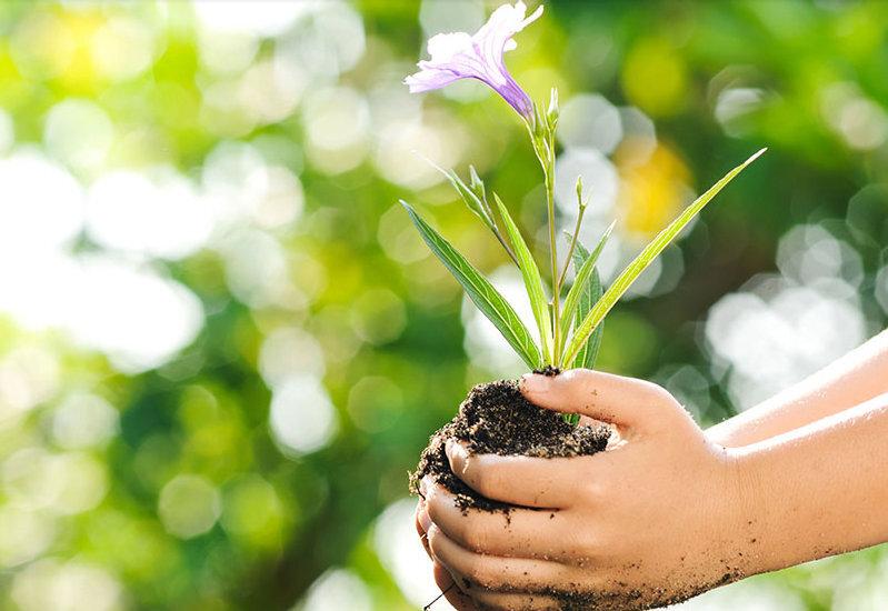 Na ação de lançamento do portal, a empresa vai distribuir, gratuitamente, 300 mudas de árvores