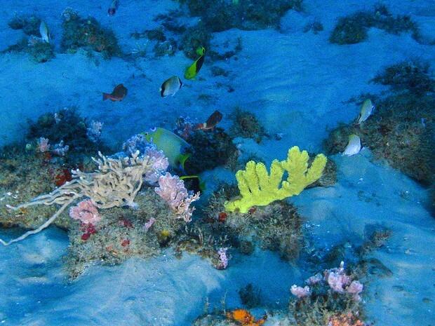 Estruturas são compostas na maioria por esponjas, corais e rodolitos