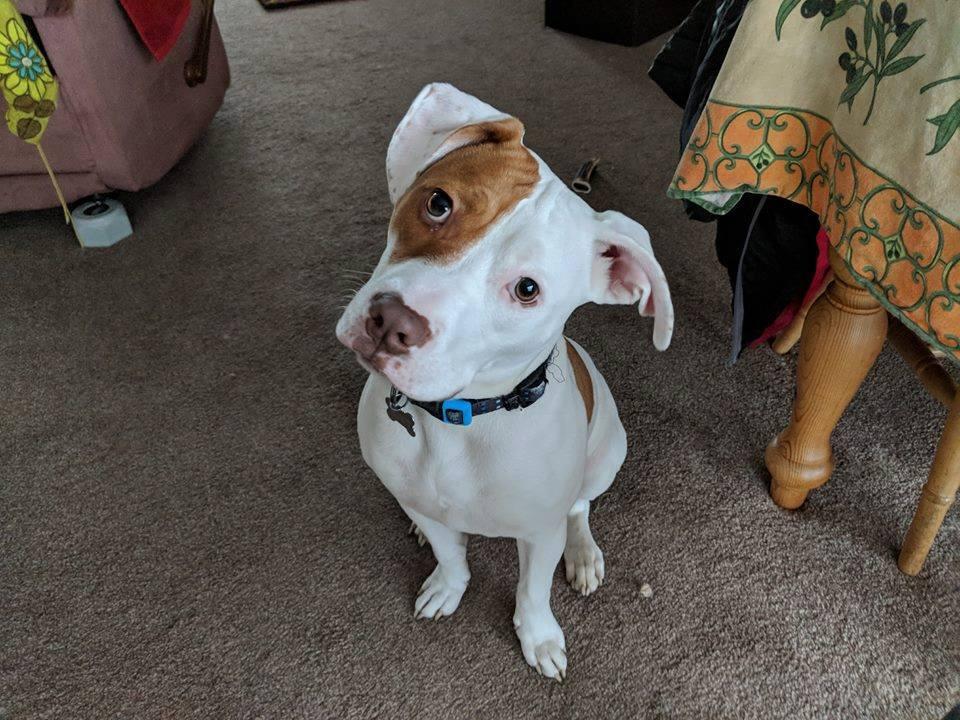 Cachorro surdo aprende linguagem de sinais após ser abandonado