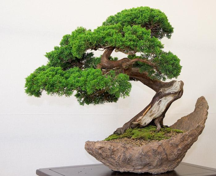 Aprenda a fazer um bonsai - Cultivo de bonsai ...