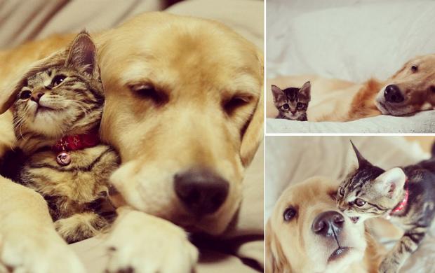 estilo catraca livre amizade cão e gato