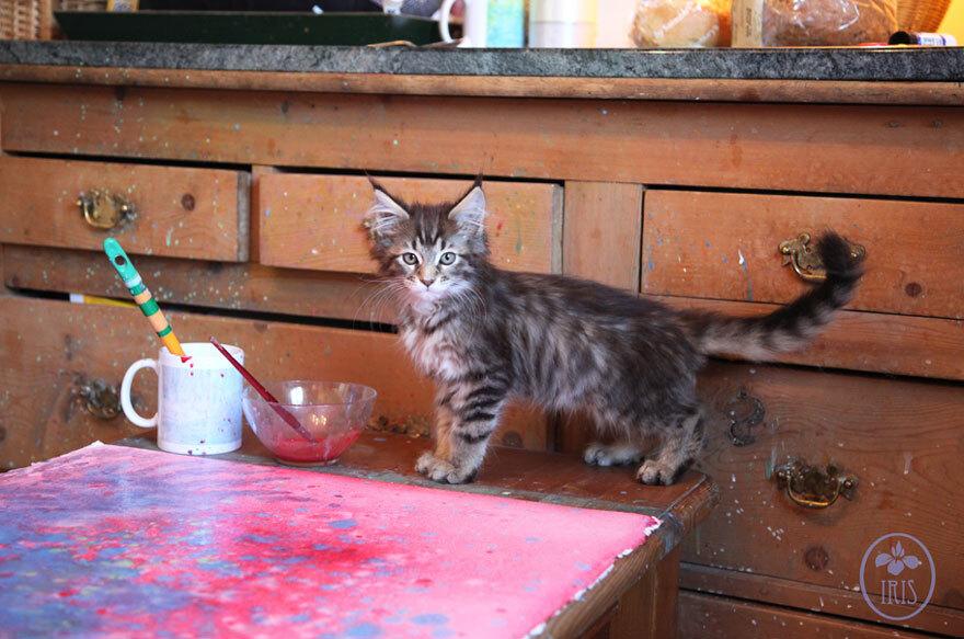 thula-therapy-cat-autistic-artist-iris-grace-18