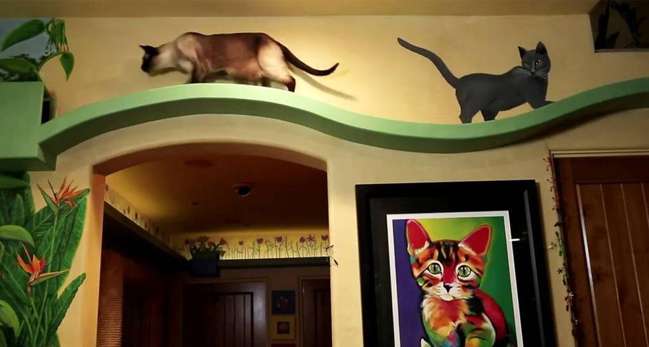 housecats2jpg