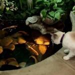 housecats4jpg